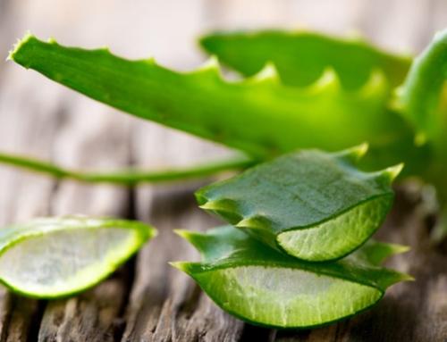 5 секретных ингредиентов для молодости и красоты кожи от Юлианы Дементьевой. Ингредиент 3